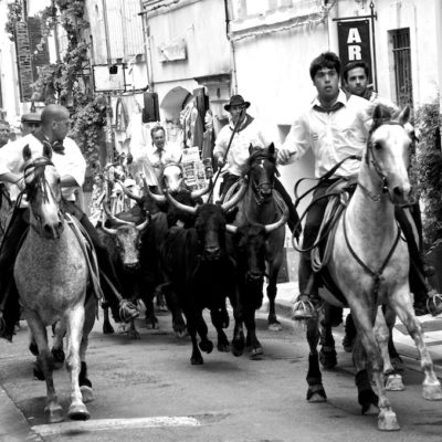 running_of_the_bulls_366